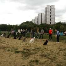 Дрессировка собак, в Москве