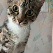Котёнок девочка хочет быть счастливой, в Домодедове