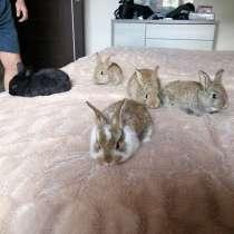 Крольчата, в г.Новополоцк