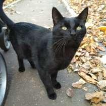 Черный кот на желтых листьях. Возьмите домашнего котика домо, в Москве