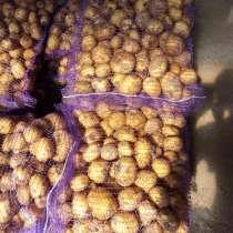 Картофель Гала урожай 2019 г, в Кунгуре
