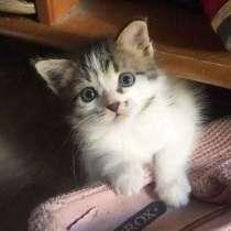 Маленький котенок в добрые руки. Крошка Мурка, в Москве