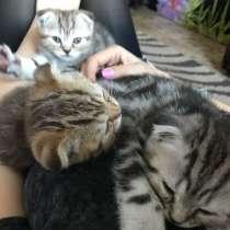 Вислоухие котята, в г.Костанай