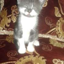 Отдам котёнка в хорошие руки), в г.Енакиево