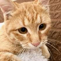 Рыжий косоглазый котик Печенькин ищет дом, в Москве