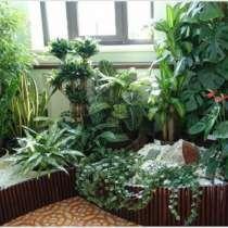 Уход за комнатными растениями Зеленая Ноль Три, в Красноярске