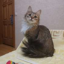 Кошечка в дар, в Москве