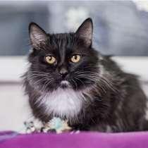 Чудесный котик Марсик ищет дом!, в Москве