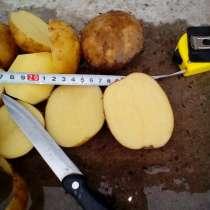 Картофель мелким оптом, в Дзержинске