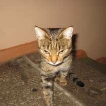 !!! Потеряшка, найдена кошка !!!, в г.Усть-Каменогорск