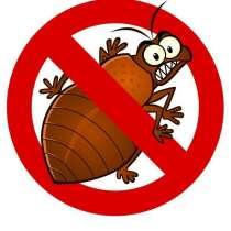 Уничтожение тараканов и клопов, в Тольятти