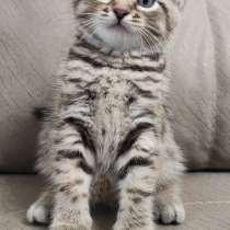 Отдам котят в добрые руки, в Касимове