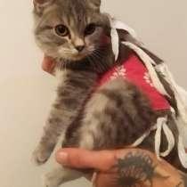 Кошечка Фила, в Краснодаре