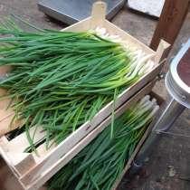 Продам зеленый лук(перо), в Бронницах