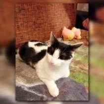 Ищем дом двум котикам подросткам, в Иванове