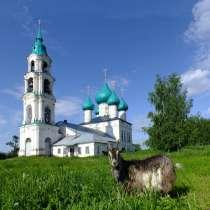 Продается участок 13 соток в селе Левашово, Ярославской обл, в Ярославле