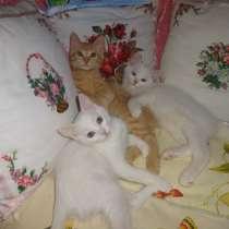 Необычный котик, в г.Мариуполь
