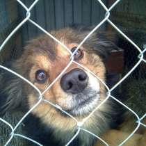Приют для бездомных животных примет в дар, в Коломне