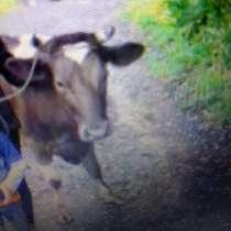 Продам корову, в Калтане
