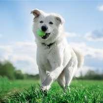 Ищет дом молодой и невероятно красивый пёс Норман!, в Москве