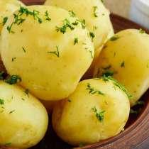 Картошка Картофель домашний вкусный с доставкой, в г.Брест