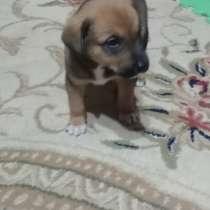 Отдам в хорошие руки 1.5 месячного щенка, в г.Ташкент