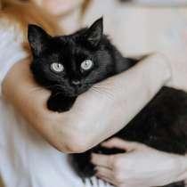 Яркая личность кошечка Шаня ищет дом, в Москве