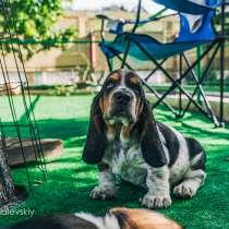 Собака, которую не встретишь на улице, в г.Мариуполь