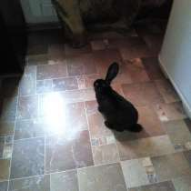 Продам кролика доброго и веселого 3 месяца кушает все овощи, в Междуреченске