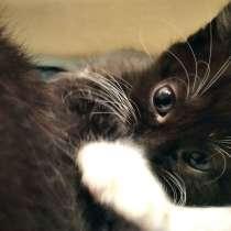 Котята в дар, в г.Жодино