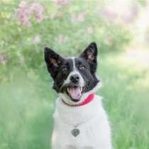 Красивая собака Герти в добрые руки, в Москве