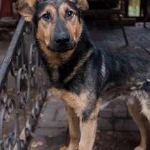 Супер-адекватный пёс Буран ищет дом, в Санкт-Петербурге