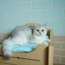 Продам красивого кота (мальчик). Порода британская (BSH), в г.Вроцлав