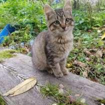 Котёнок девочка, в Апрелевке