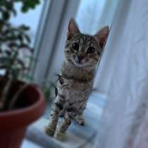 Котёнок, в Санкт-Петербурге