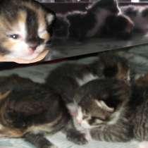 Отдам котят в связи с наводнением неравнодушным людям, в Комсомольске-на-Амуре