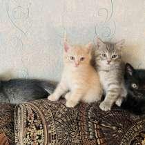 Котята, в Новосибирске