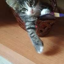 Умные котята ищут добрых хозяев, в Узловой