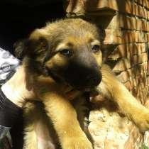 В хорошие руки-три щенка, в Ростове-на-Дону