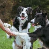 Дрессировка собак, Зеленоград, Химки, Сходня, Фирсановка, в Зеленограде