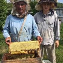 Мёд из Башкирии, в Санкт-Петербурге