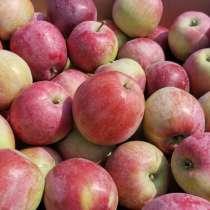 Яблоки Либерти, в Краснодаре