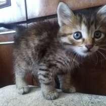 Кошечка в хорошие руки! Очень ласковая!, в г.Бердянск