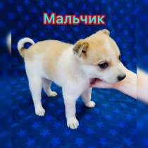 Щенки (2 месяца), в Омске