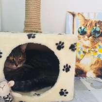 Домашняя передержка животных коты/кошки, в Краснодаре