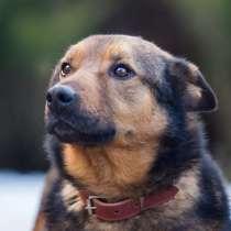 Рекс - самый умный и самый душевный пес в дар, в Москве