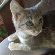 Прекрасного котёночка (девочку) отдадим в добрые руки, в Багаевского