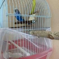 Продам волнистого попугая, в Москве