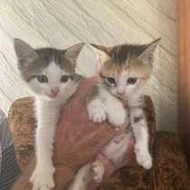 Котята в добрые руки, в Ессентуках