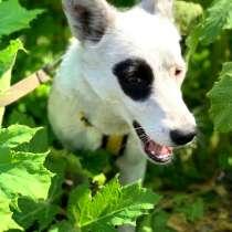 Белочка - добрая собачка ищет постоянных хозяев, в Москве
